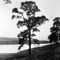 Lindley Reservoir, Tree